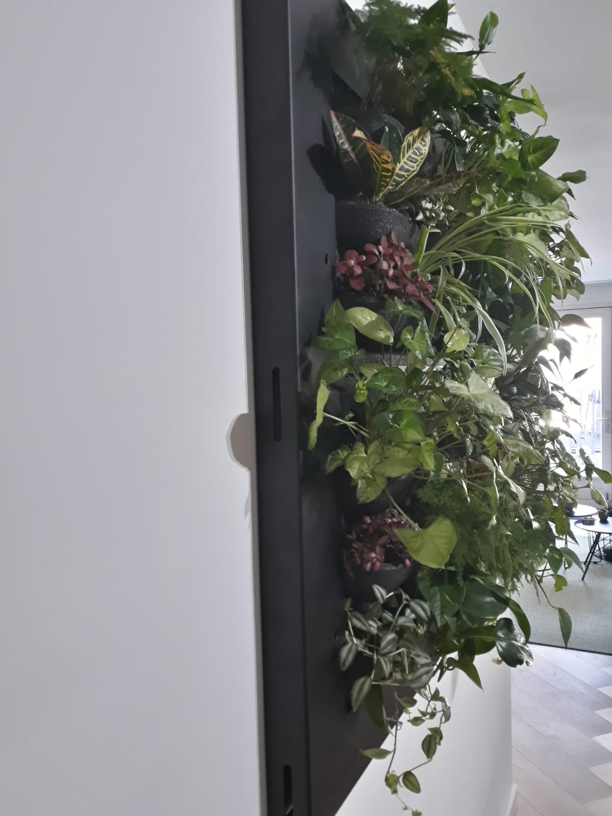 stalen frame om plantenwand